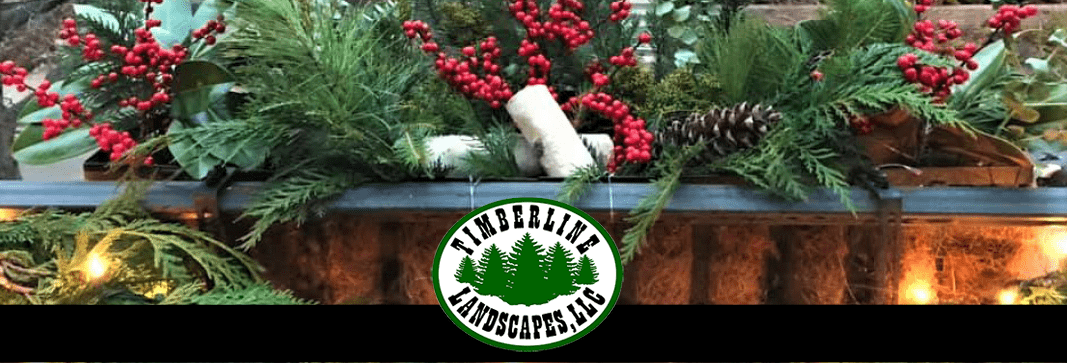 December 2019 2 – Newsletter Banner Cropped